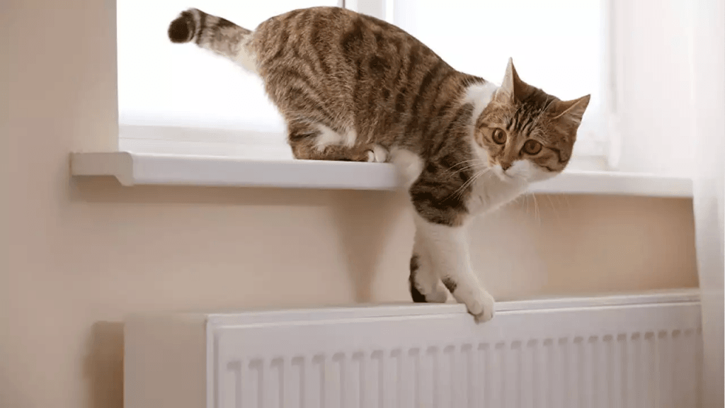 Завершення опалювального сезону. Кіт злазить з батареї